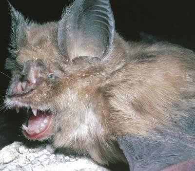 China: vuelven a vender murciélagos y carne de animales domésticos a pesar del coronavirus